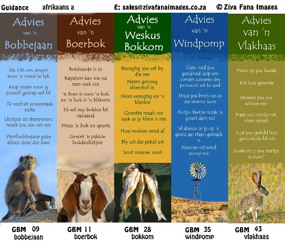 Catalogue A of the Afrikaans guidance bookmarks